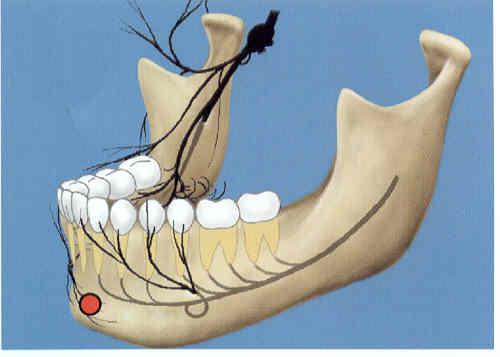 nervus-verloop